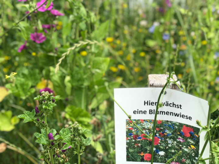 Bienenwiese in Sinnersdorf